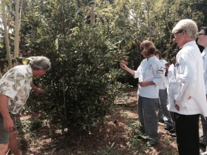 KU MLB Edible Forest March 2015 (4)