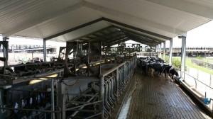 KU SAR Dakin Dairy April 2015 (2)