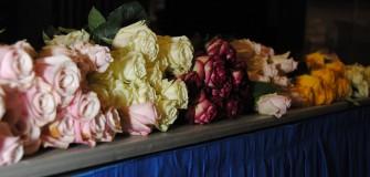 KU MIA roses June 2015