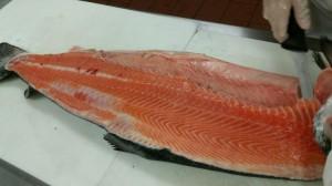 KU SAR Fileting Salmon June 2015 (3)